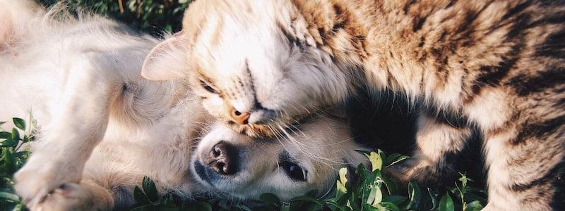 Välja rätt djurförsäkring