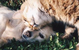 Information om djurförsäkringar