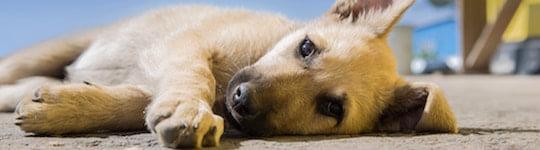 Jämför hundförsäkring