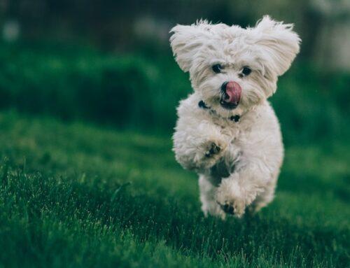 Guide till hundförsäkringen