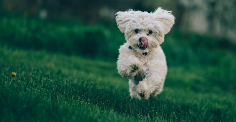 Guide till hundförsäkring