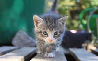 Katt och försäkringar