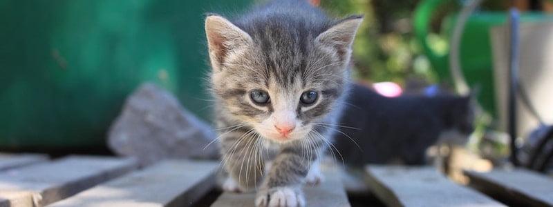 Guide kattförsäkring