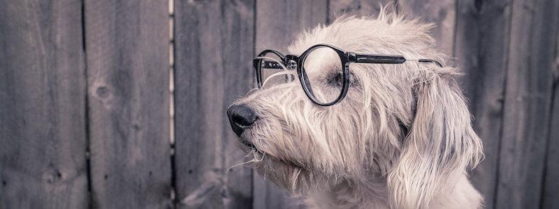 Moderna Försäkringar eller ManyPets hundförsäkring